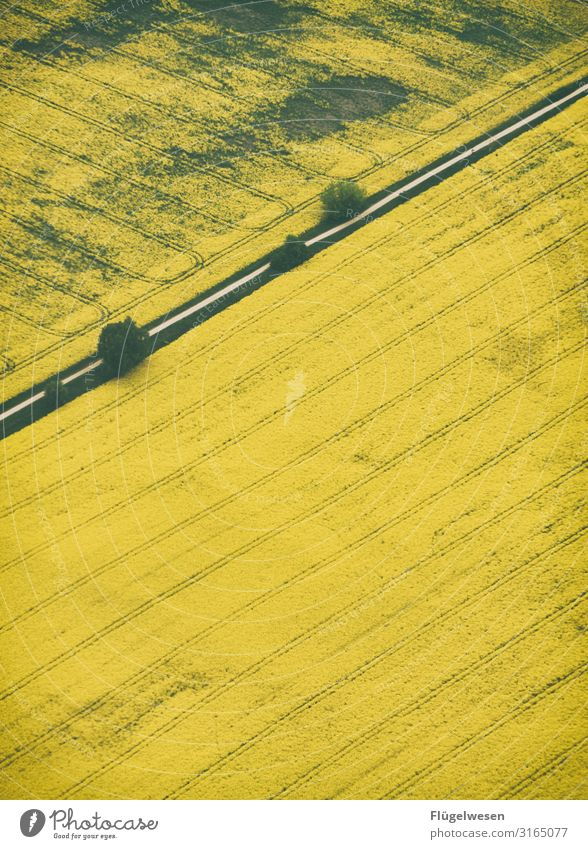 rapeseed body Food Trip Far-off places Freedom Environment Nature Landscape Climate Climate change Meadow Field To dry up Growth Green pastures Blossoming