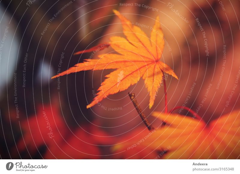 autumn leaf Calm Nature Plant Autumn Tree Leaf Park Forest Wood Simple Sustainability Natural Brown Yellow Orange Red Black Colour Climate Life Environment