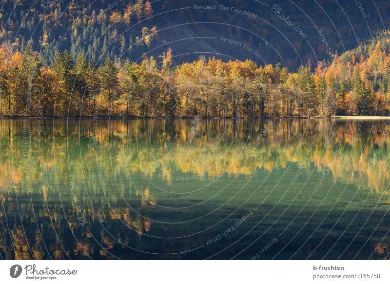 autumn mirroring Harmonious Calm Vacation & Travel Mountain Hiking Nature Autumn Tree Park Forest Alps Lakeside Elegant Idyll Religion and faith Change Autumnal