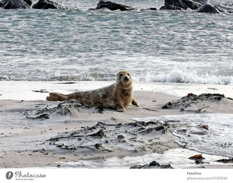 Helgoland's next top model Environment Nature Animal Elements Earth Sand Water Waves Coast Beach North Sea Ocean Island Wild animal Pelt 1 Free Bright Near Wet