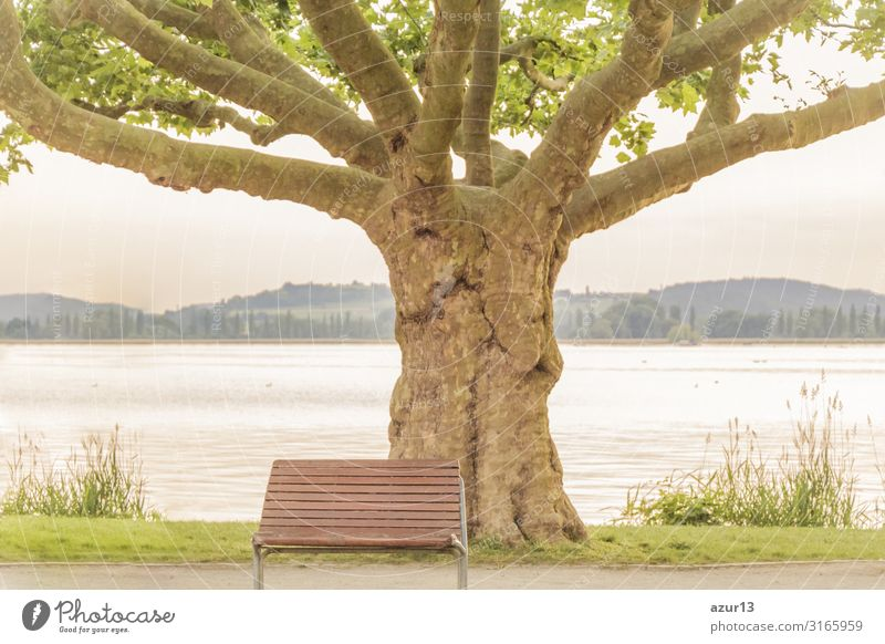 Empty lonely bench near majestical old tree at lake shore Beverage Relaxation Summer Nature Park Jump Power Calm silence sea Victoria & Albert Waterfront water