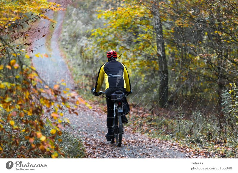 Mountain biking in autumn Sports Cycling Environment Nature Landscape Plant Autumn Esthetic Mountain bike Colour photo Exterior shot