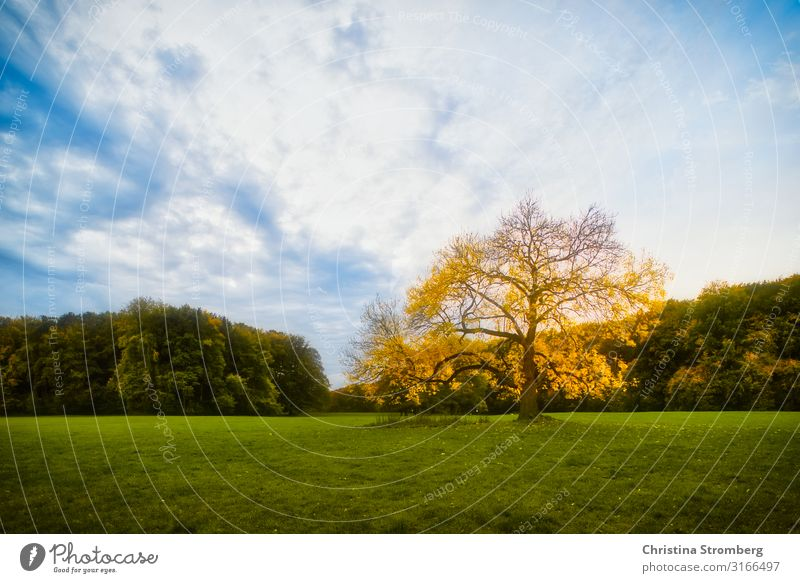 autumn mood Environment Nature Landscape Plant Sky Autumn Beautiful weather Tree Park Blue Yellow Green Optimism Power Safety (feeling of)