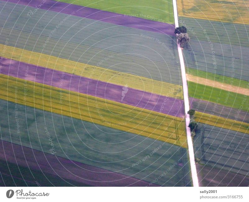 Colour combination... ...in agriculture... Field Agriculture fields Street Direct Plots Tree Bird's-eye view land consolidation variegated rectangular
