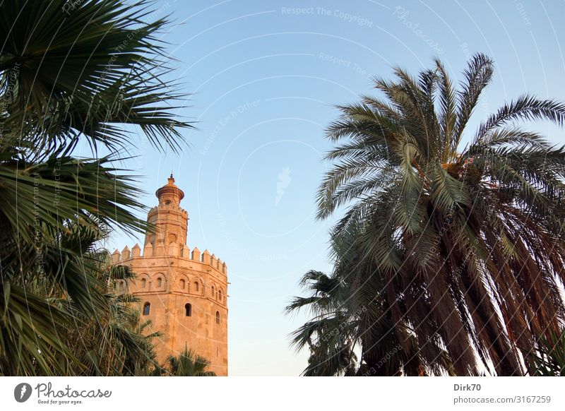 Torre del Oro in Seville between palm trees Vacation & Travel Sightseeing City trip Summer Architecture Beautiful weather Plant Tree Palm tree Park Andalucia