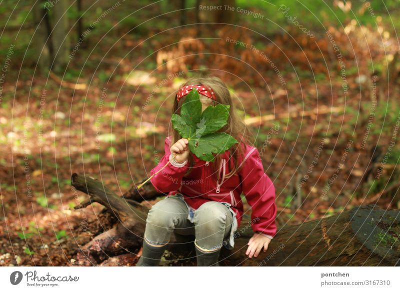 Child sits on a tree root in the forest and holds a large green leaf in front of his face. Hide Joy Leisure and hobbies Playing Children's game Adventure Summer