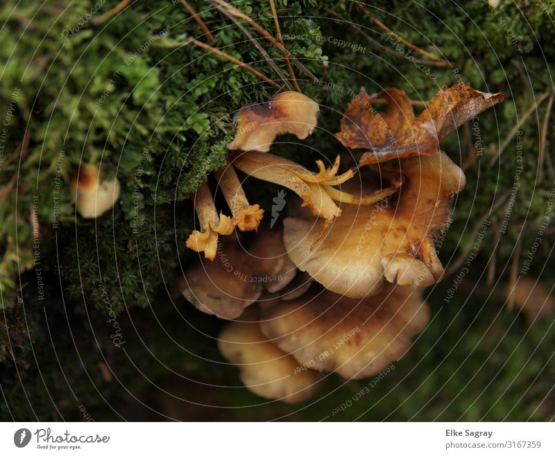 tree mushrooms , mushrooms in forest Nature Plant Animal Moss tree pills Forest Colour photo Exterior shot Deserted Copy Space left Morning