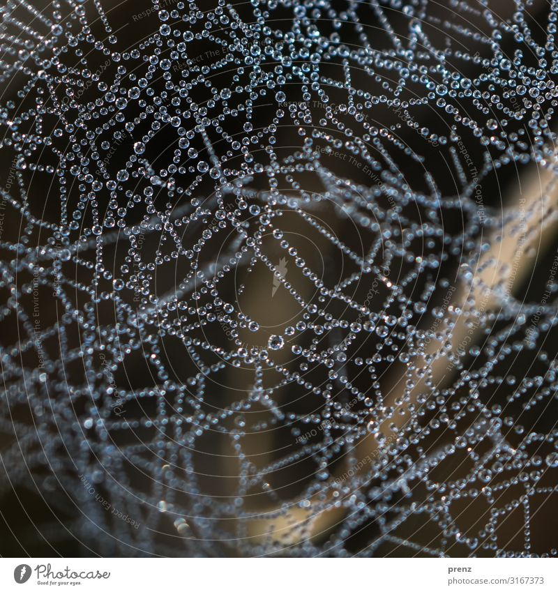 www Environment Nature Animal Spring Summer Autumn Climate Weather Beautiful weather Forest Gray Green Network Reticular Spider's web Dew Water Drop