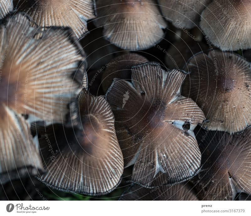 cuddly Environment Nature Autumn Old Brown Gray Mushroom Multiple Colour photo Exterior shot Deserted Day Shallow depth of field Bird's-eye view