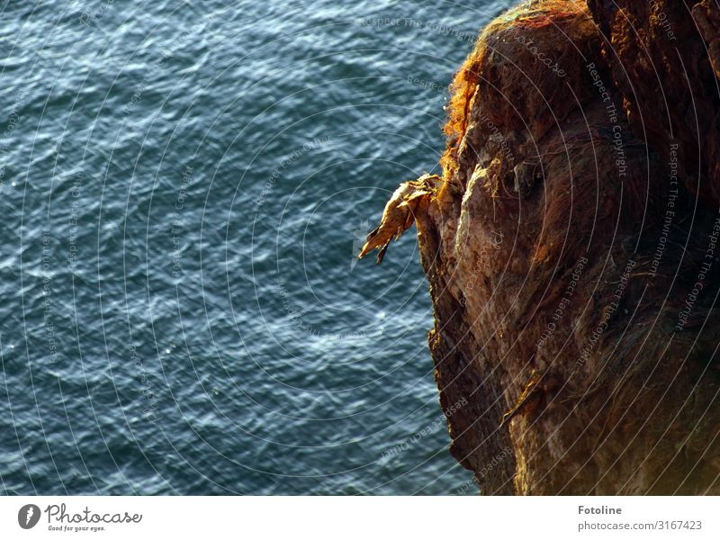 Death at the red rock Environment Nature Elements Water Waves Coast North Sea Ocean Animal Wild animal Bird 1 Bright Wet Natural Blue Brown Northern gannet