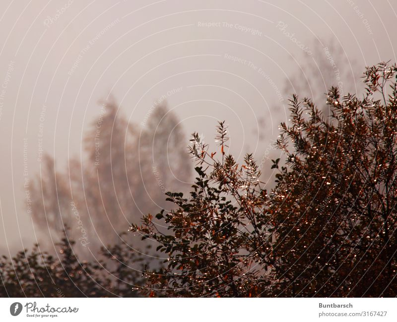 Nature Plant Water Landscape Red Calm Dark Autumn Environment Natural Brown Moody Fog Weather Glittering Air