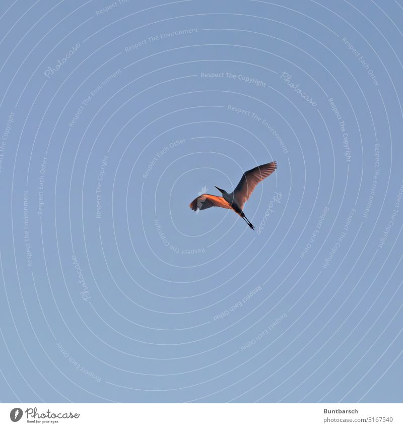 Sky Nature Animal Environment Bird Flying Wild animal Wing Cloudless sky Grey heron