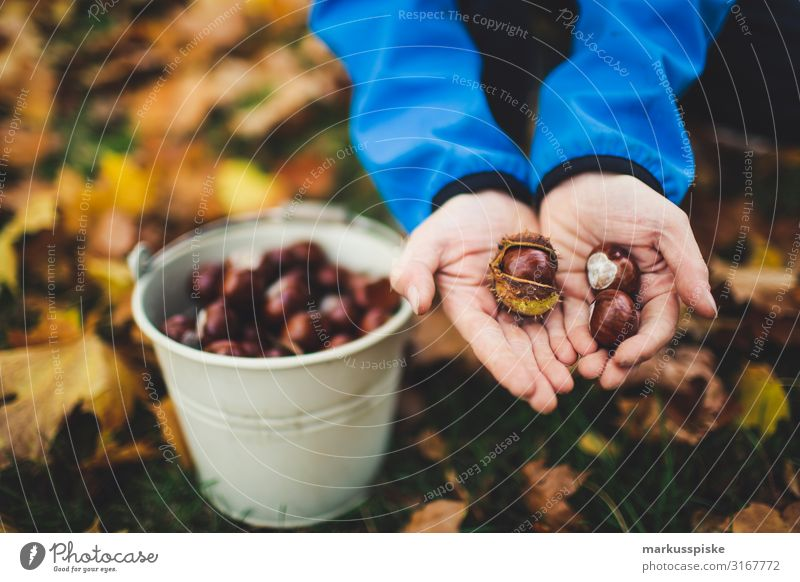 Child Nature Hand Tree Leaf Joy Autumn Environment Blossom Happy Boy (child) Playing Leisure and hobbies Infancy Fingers Discover