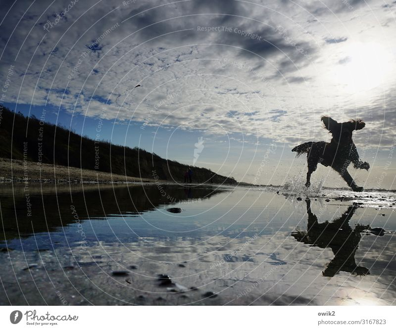 Sky Nature Dog Water Landscape Clouds Animal Joy Far-off places Beach Environment Playing Horizon Air Idyll Happiness
