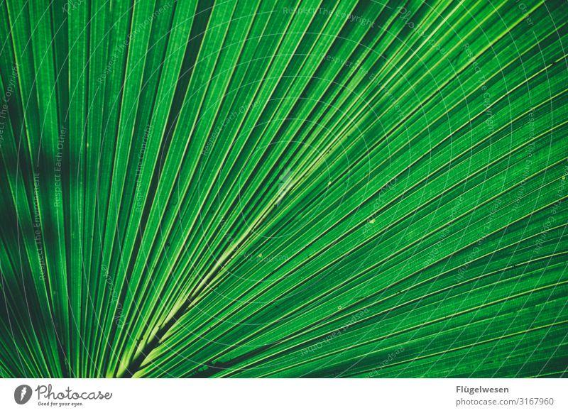 shadow plays Leaf leaves Green Bright green Plant Light (Natural Phenomenon) Shadow stalk Sun enlargement wax Palm tree palm leaf reed Colour Guide