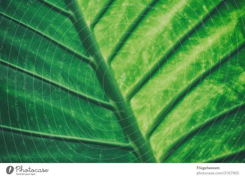 leaf Leaf leaves Green Bright green Plant Light (Natural Phenomenon) Shadow stalk Sun enlargement wax Palm tree palm leaf