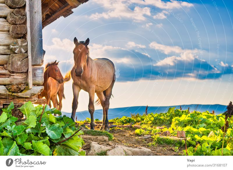 Horse with little foal Sky Nature Summer Plant Blue Beautiful Green White Landscape Sun House (Residential Structure) Clouds Animal Mountain Black Autumn