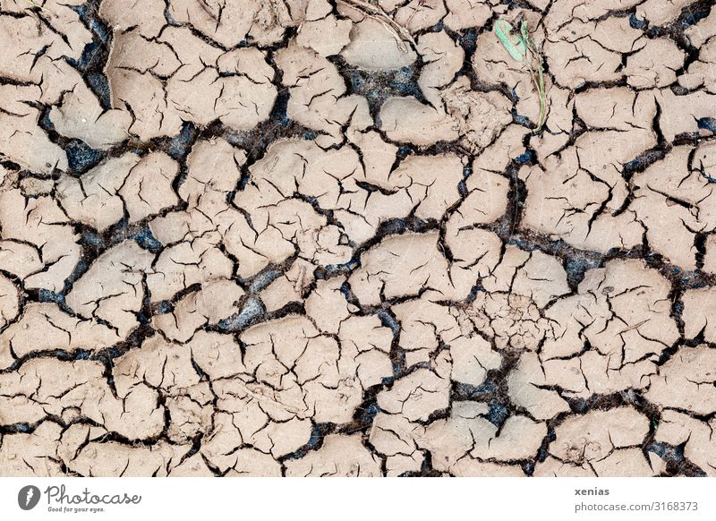 parched ground Drought Environment Climate change Nature Landscape Earth Desert To dry up Dry Brown lack of water Warmth lack of rain Shriveled