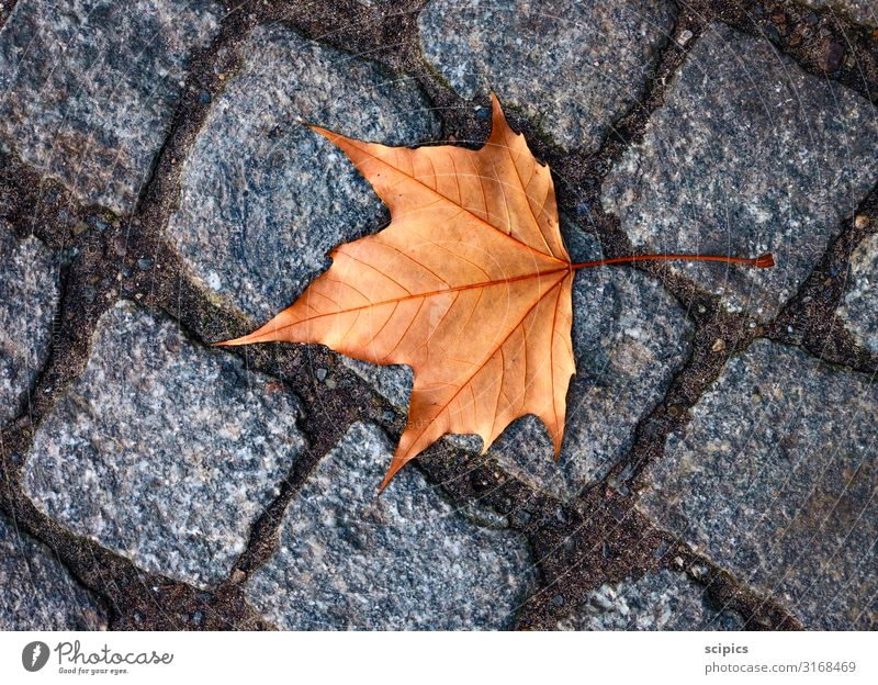 leaf Landscape Autumn Tree Leaf Park Stone Sand Concrete Walking Lie Uniqueness Cold Yellow Gray Moody Caution Variable Movement Relaxation Colour Climate