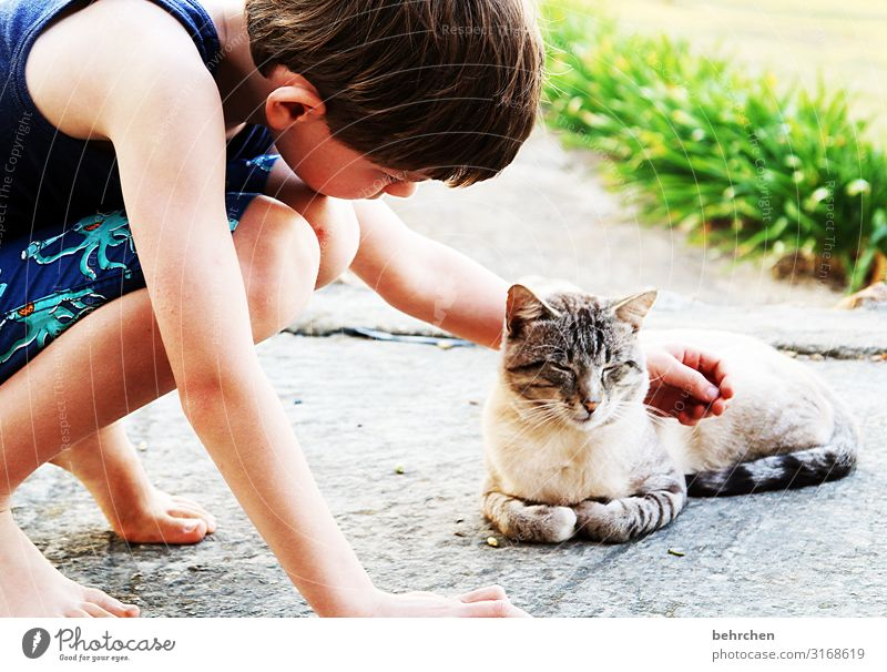Cat Child Vacation & Travel Beautiful Far-off places Legs Boy (child) Tourism Freedom Hair and hairstyles Head Trip Infancy Back Adventure Arm