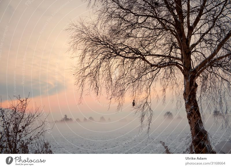 Sky Vacation & Travel Nature Christmas & Advent Landscape Tree Loneliness Winter Natural Snow Orange Moody Ice Dream Fog Idyll