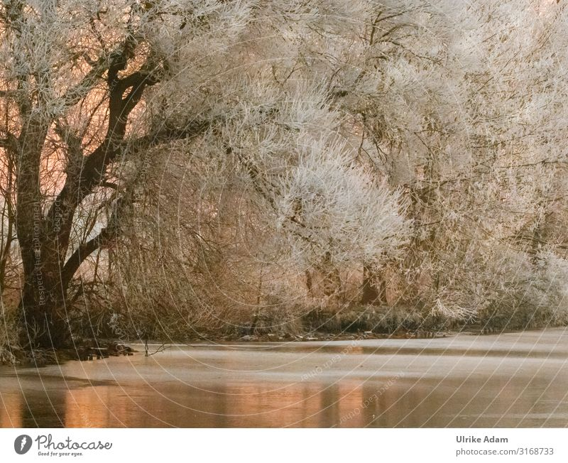 winter dream Winter Snow Wallpaper Card mourning card Feasts & Celebrations Christmas & Advent Funeral service Nature Plant Ice Frost Tree River bank