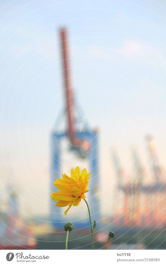 Blue Yellow Pink Hamburg Crane Port City