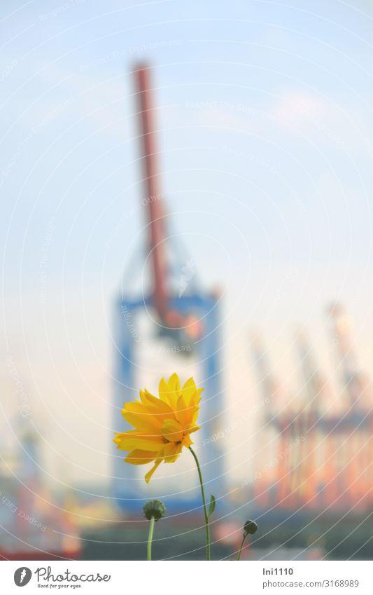 Garden on the Elbe beach | UT Hamburg Port City Blue Yellow Pink Crane Twilight Sunset Dockside crane Goods lift Silhouette Vantage point Flower övelgönne