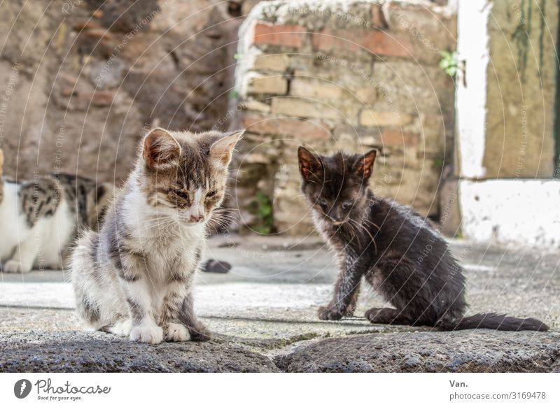 street kittens Sicily Village Wall (barrier) Wall (building) Animal Cat 2 3 Small Gray White Sadness Fate Colour photo Subdued colour Exterior shot Deserted Day