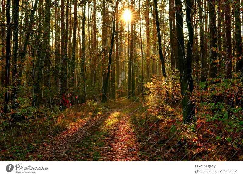 October morning atmosphere in the forest Nature Landscape Plant Animal Storm clouds Tree Grass Forest Observe Fantastic Colour photo Multicoloured Exterior shot