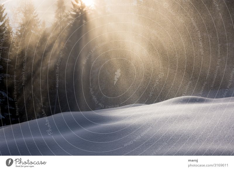 Calm Winter Life Snow Exceptional Snowfall Contentment Ice Frost Harmonious Meditation Smooth Snowscape Winter vacation