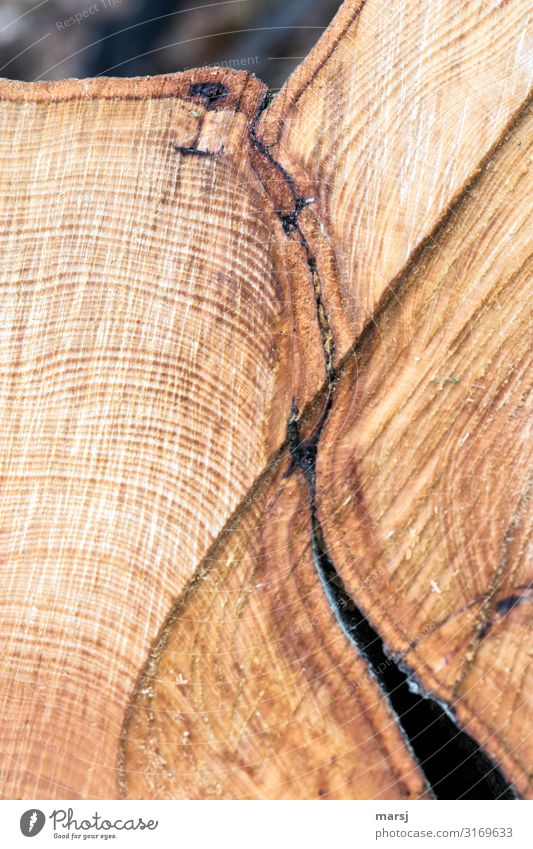 connectedness Life Harmonious Annual ring saw cut sawn Wood Together Brown Warm-heartedness Sympathy End Uniqueness point of contact Consolidate Tree bark