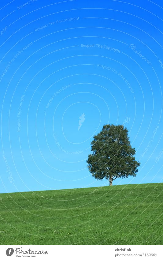 Tree on meadow Vacation & Travel Tourism Trip Environment Nature Landscape Plant Sky Grass Old Healthy Blue Green Emotions Truth Honest Grief Loneliness Slope