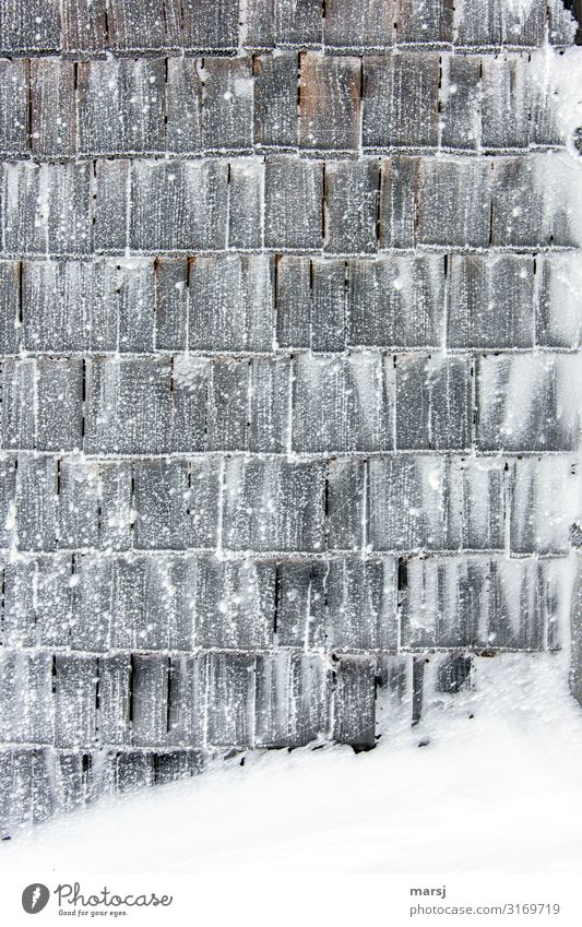 Winter Dark Wood Wall (building) Cold Snow Wall (barrier) Exceptional Together Ice Uniqueness Protection Frost Frozen Sharp-edged Wooden wall
