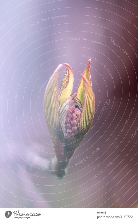 Cuddly Life Nature Spring Plant Bud Leaf Elegant Together Joie de vivre (Vitality) Spring fever Anticipation Hope Delicate Dreamily Colour photo Multicoloured