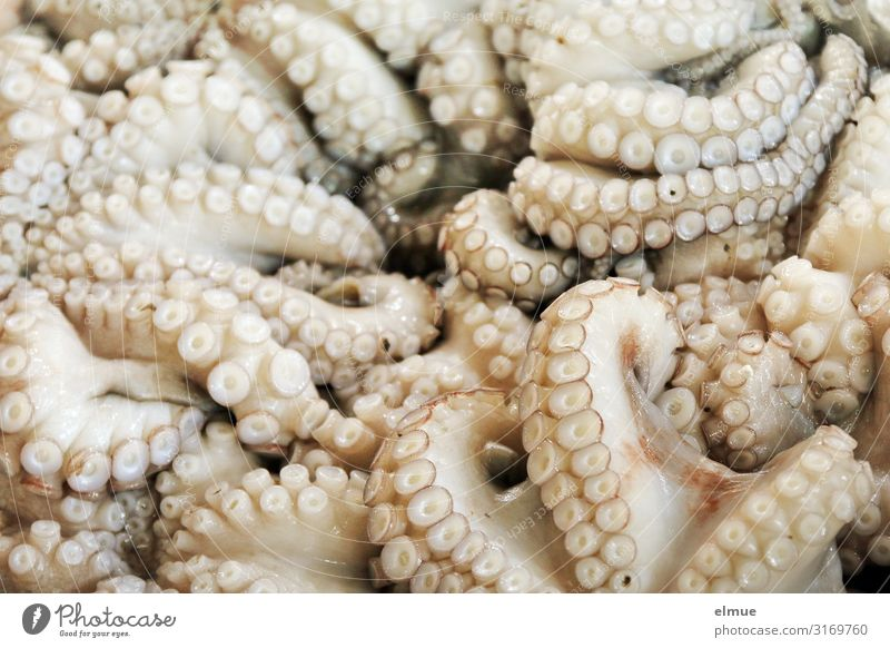 you take ... Food Fish Seafood Shopping Trade Fishery Offer freshly caught Dead animal calamari Octopods Octopus Squid Marine animal Sea water Suction pad