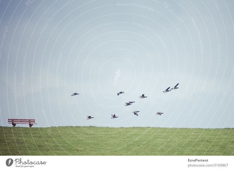 departure Environment Nature Landscape Sky Horizon Spring Summer Climate Weather Beautiful weather Grass Meadow Animal Wild animal Bird Group of animals Flock