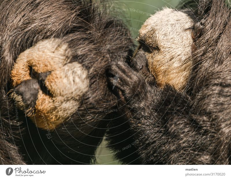 wellness Animal Pelt 2 Brown Gray Green Monkeys Wellness Leipzig Dental care Colour photo Subdued colour Exterior shot Close-up Copy Space left Copy Space right
