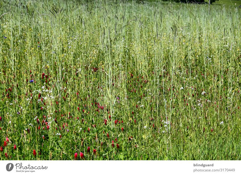 wildflower meadow Environment Nature Landscape Plant Summer Climate Climate change Beautiful weather Flower Grass Blossom Foliage plant Wild plant Meadow Fly