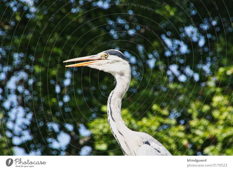 There's a heron on the wall, and from below you can see his... Feet Heron birds Pelecaniformes herons Grey heron Animal Nature Exterior shot Colour photo