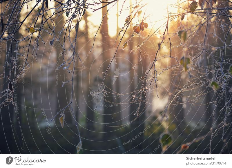Nature Tree Leaf Autumn Cold Ice Frost Frozen Spider's web Hoar frost