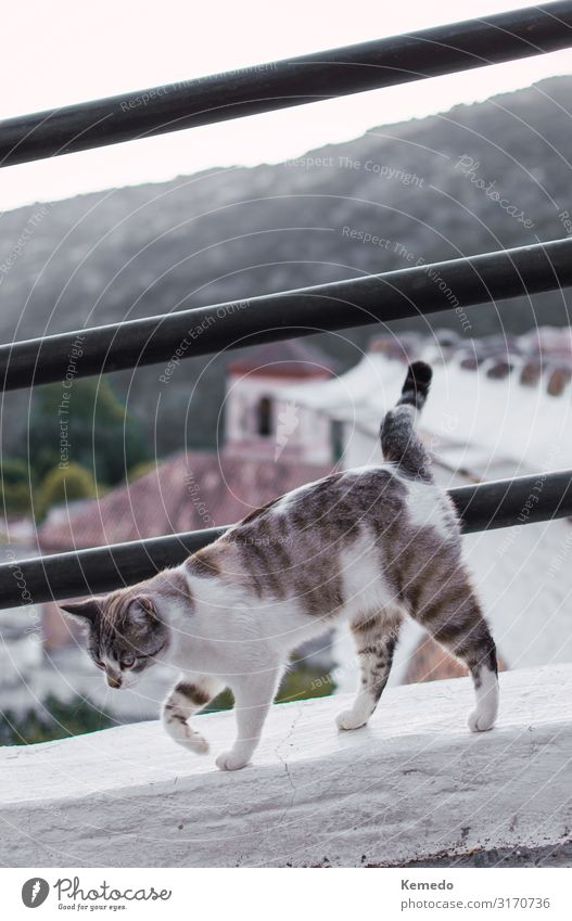 Beautiful cat of a mountain village walking along the ledge. Cat Sky Vacation & Travel Nature Summer Town White Landscape House (Residential Structure) Animal