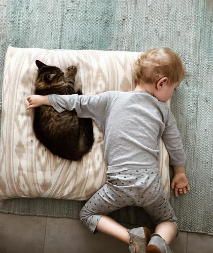 Cat Animal Lifestyle Love Emotions Happy Boy (child) Together Friendship Living or residing Flat (apartment) Contentment Dream Infancy Idyll