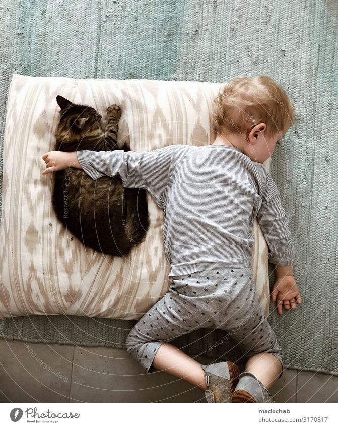 Friendship - child embraces cat while sleeping animal protection Lifestyle Living or residing Flat (apartment) Toddler Boy (child) Infancy Animal Cat Emotions