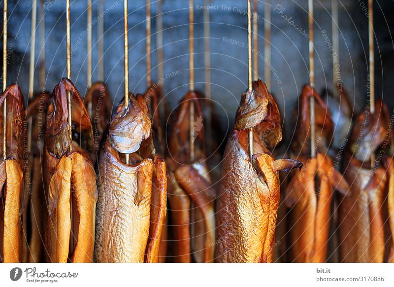 fresh, whole fish, hangs in a smoke oven with smoke for smoking, on a fish market to buy. Fish Kipper Smoked Nutrition Food Deserted Hang Delicious Close-up