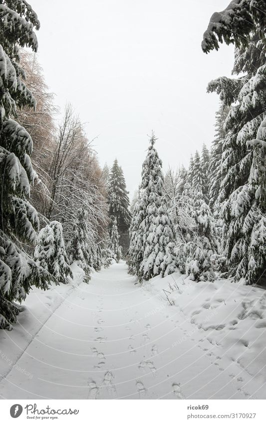 Winter with snow in the Thuringian Forest near Oberhof Vacation & Travel Winter vacation Mountain Hiking Winter sports Nature Landscape Tree Lanes & trails Cold