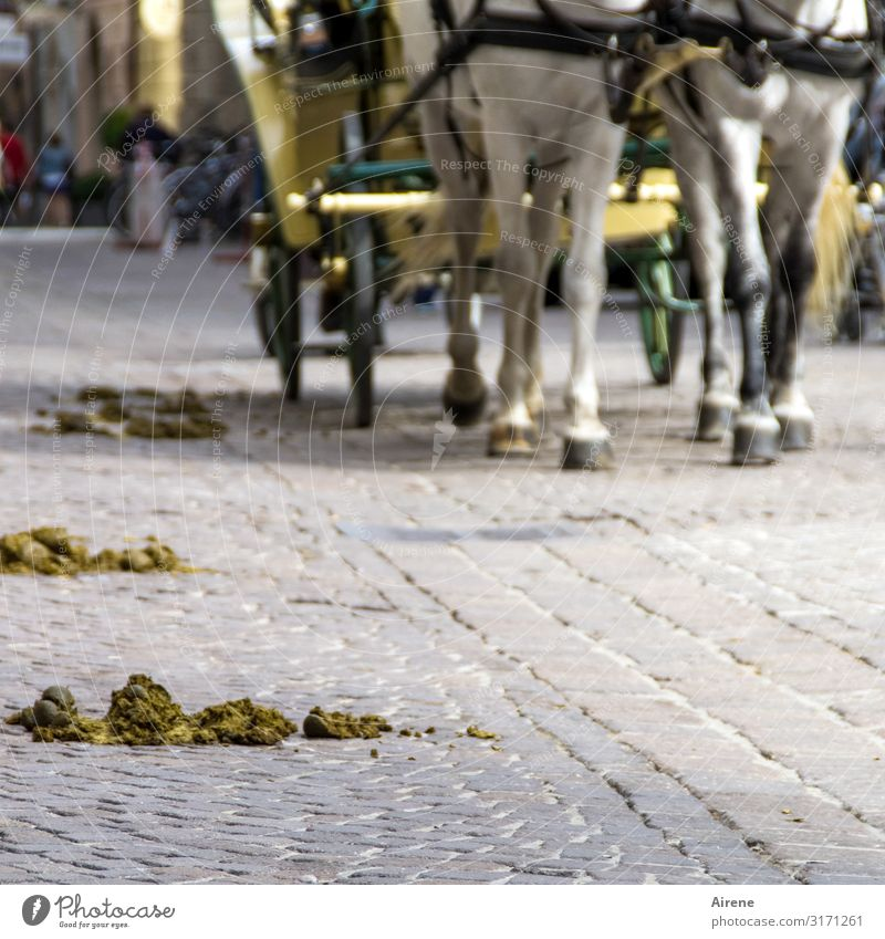 Lost apples. Trip Sightseeing City trip Salzburg Street Cobblestones Horse-drawn carriage Hackney Hoof 2 Animal horse apple Feces Excretion Crap Horse and cart