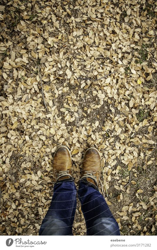 Feet in fallen leaves Lifestyle Style Hiking Human being Woman Adults Man Nature Autumn Leaf Park Forest Fashion Jeans Footwear Boots Sneakers Natural Brown