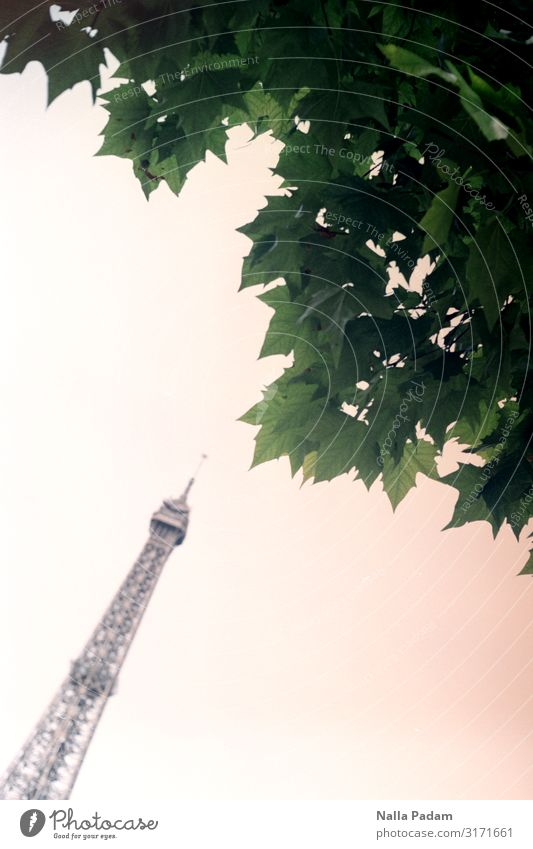 Green Tree Leaf Gray Europe Esthetic Tower Tourist Attraction Landmark Capital city France Kissing Paris Eiffel Tower