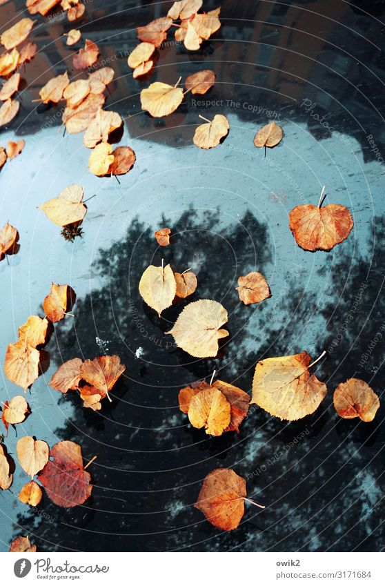 autumn meeting Plant Sky Autumn Beautiful weather Tree House (Residential Structure) Car Car Hood Mirror Mirror image Together Under Blue Multicoloured Yellow
